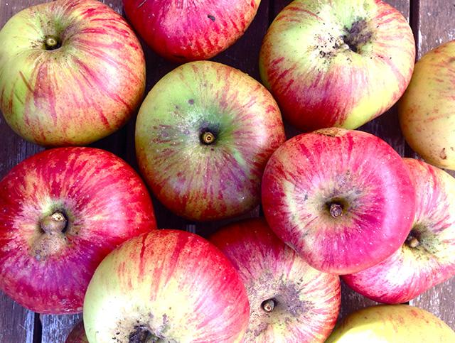 20161020_apple4