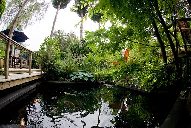 ジャングル・ガーデン
